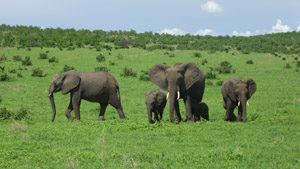 Tanzania, paradiso selvaggio