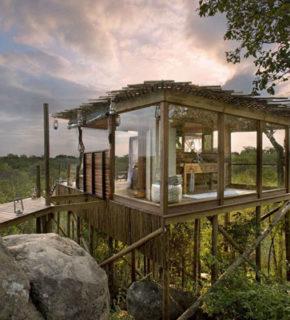 Sudafrica: sentirsi come Tarzan