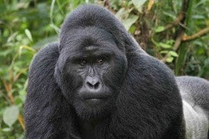 Uganda_2_2015
