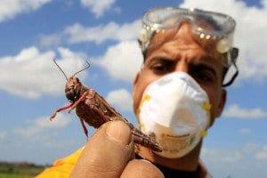 Madagascar, guerra alle locuste