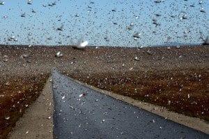 Madagascar, guerra alle locuste_01