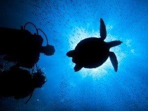 Le Sirene del Mozambico - tartarughe marine
