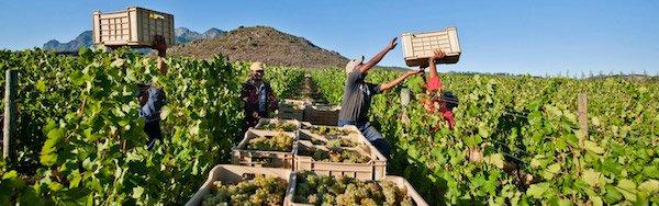 Sudafrica: il paradiso del vino