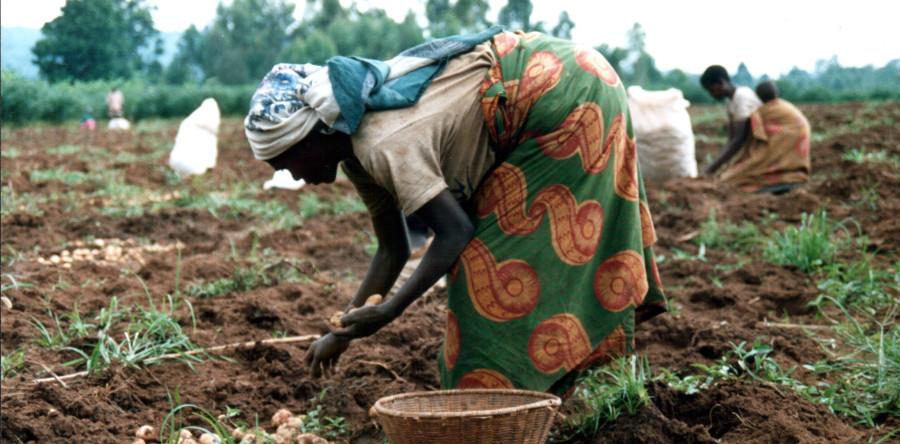 Risultati immagini per agricoltura in africa