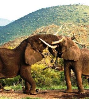 Tanzania, safari e mare