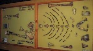 Lo scheletro di Lucy conservato ad Addis Abeba