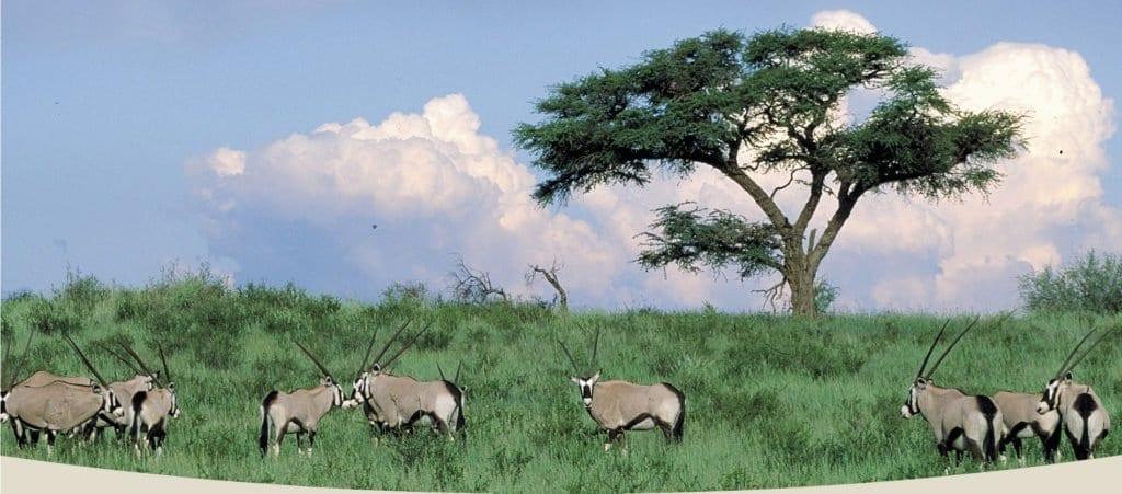 Ecoturismo in Africa Meridionale