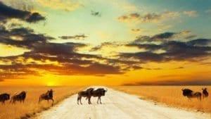 A Febbraio, proiezioni africane in Brianza