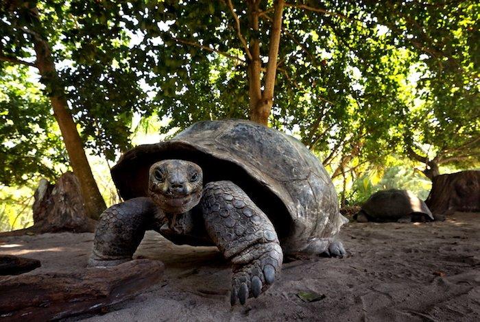 Seychelles: paradiso naturale
