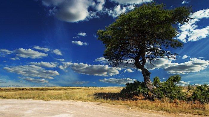 Namibia: gli animali di Etosha