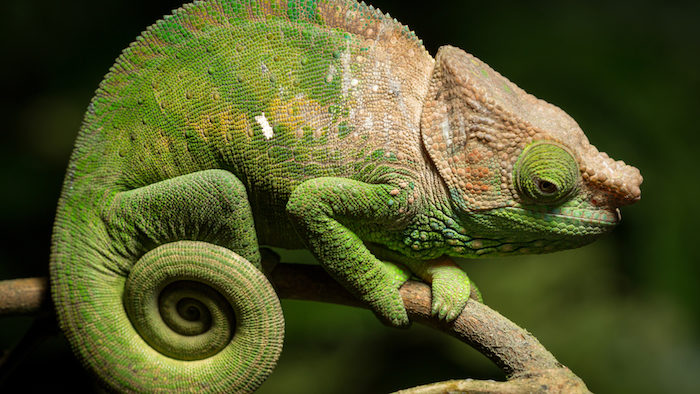 Madagascar: elogio della lentezza