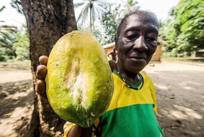 Sierra Leone: trasformare la frutta per ricostruire un Paese