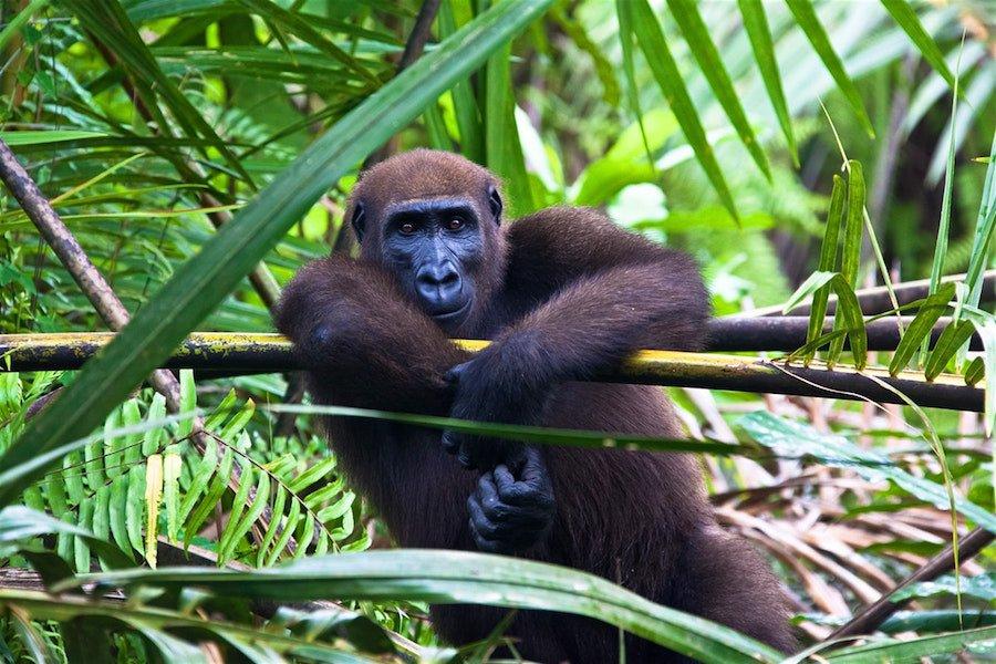 Ecoturismo in Gabon