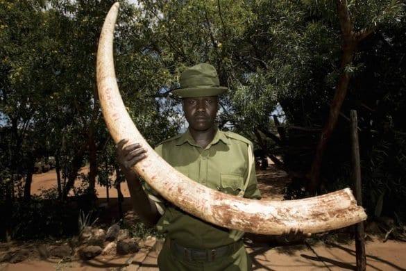 Reportage dalla Tanzania: l'infinita strage degli elefanti
