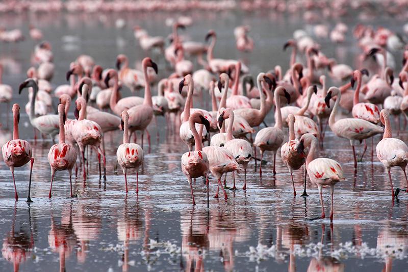 Kenya 100 sito di incontri gratuito