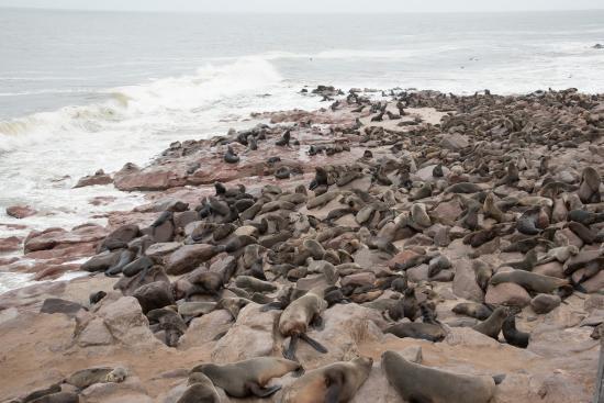 Namibia: novembre e dicembre destinazione Cape Cross