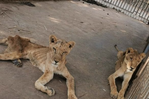 leoni sudan