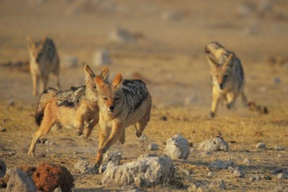 NAMIBIA FABIO VEGETTI (1)