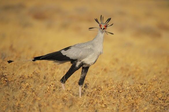 NAMIBIA FABIO VEGETTI (15)