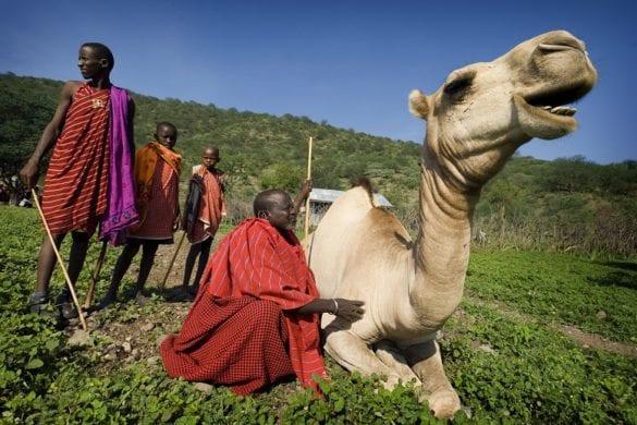 Masai 6