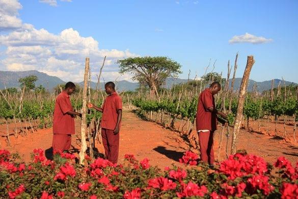 Vino Tanzania